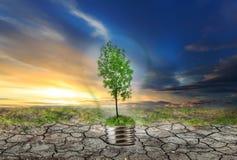 Green tree in lamp on dry soil Stock Image