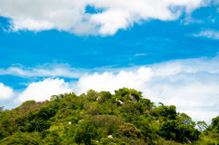 Green tree land with clear blue sky on day noon light Royalty Free Stock Images