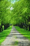 Green tree lane Royalty Free Stock Images