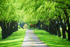 Green tree lane Royalty Free Stock Photos