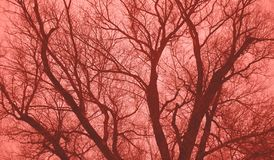 Green tree without leaves against the sky. Toned in coral color. Green tree without leaves against toned in coral color stock photo