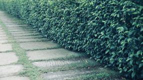 Green tree leaves around a walkway of a park stock photo