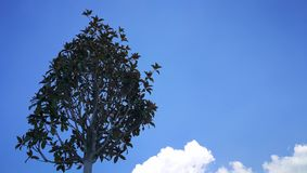 Tree in the sky stock photography