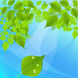 Green tree leaves on a blue background Stock Images