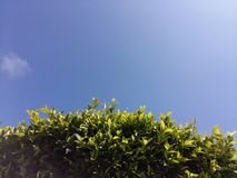 Green Tree Leaves Blue Sky. Green Tree Leav es down Blue Sky Royalty Free Stock Photography