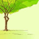 Green tree with leaves and brown bark copy space Stock Photo