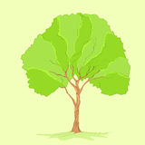 Green tree with leaves and brown bark vector Stock Photography