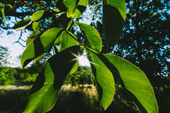Green tree leaves in garden Stock Images