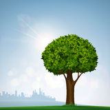 Green tree with leaves. Nature on the background of the urban la Royalty Free Stock Images