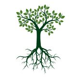Green Tree with Leaves and Roots. vector illustration