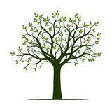 Green Tree with Leaves and Roots. Vector Illustration vector illustration