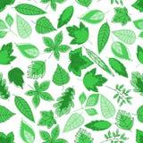 Green tree leaves seamless pattern Stock Image