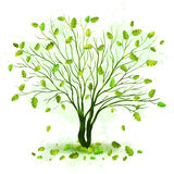Green tree with leaves vector Stock Photos