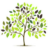Green tree with leaves on white background vector Royalty Free Stock Image