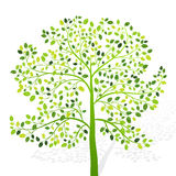 Green tree with leaves on white background vector Royalty Free Stock Photo