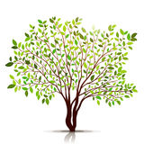 Green tree with leaves on white background vector Stock Images