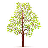 Green tree with leaves on white background vector Stock Image