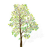Green tree with leaves on white background vector Stock Photos