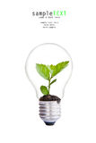 Green tree in light bulb Stock Photo