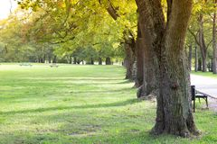 Green tree lined. royalty free stock image