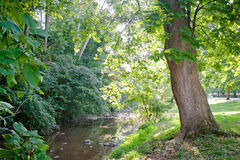 Green Tree Lined Creek Royalty Free Stock Photos