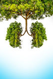 Green tree lungs Stock Photos