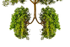 Green tree lungs Stock Photo
