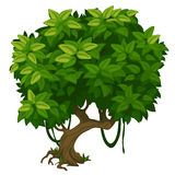Green tree with lush foliage closeup. Vector Royalty Free Stock Photo
