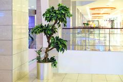 Green tree in the Mall. Designer landscaping. Artificial tree. Natural greens for the interior. Green tree in the Mall. Landscaping design. Natural greens for Royalty Free Stock Photography