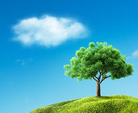 Green tree on meadow Stock Photos