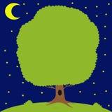 Green tree on meadow, moon is shining Stock Image