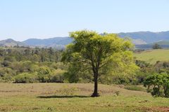 Green Tree in the meadow with mountains royalty free stock image
