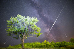 Green tree Milky way night sky falling stars Stock Photos