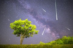 Green tree Milky way night sky falling stars Stock Images