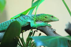 Green tree monitor. On the tree Stock Images