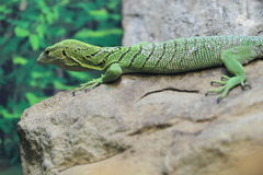 Green tree monitor Stock Photo