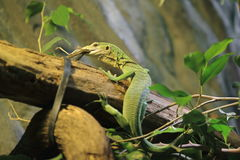Green tree monitor Royalty Free Stock Photos