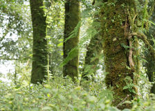Green tree with moss and fern Royalty Free Stock Photography