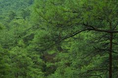 Dense green tree mountain forest background stock image