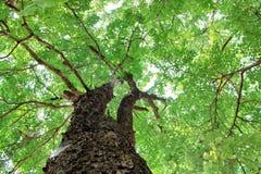 Green  tree nature asia pop art. Nature asia tree water beautifu Stock Photo