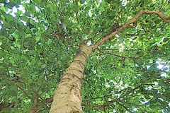 Green  tree nature asia pop art. Nature asia tree water beautifu Stock Image