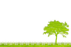The green tree nature from grass with white background. Stock Photos