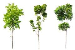 green tree nature isolated Stock Photos