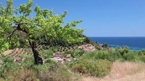 Green tree in Nea Skioni village, Kassandra peninsula, Chalkidiki, Greece stock video footage