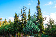 Green tree near to the ocean in Kemer, Turkey Royalty Free Stock Photography