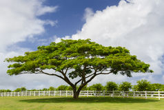 Green Tree next to a White Fence Royalty Free Stock Photos