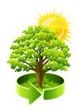 Green tree oak as ecology symbol. Vector illustration isolated on white background Royalty Free Stock Image