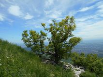 Green tree. One green tree on the mount Beshtau Stock Photo
