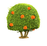 Green tree with orange fruits. Isolated on the white background Stock Photo