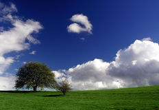 Green tree over blue sky. Green tree on top of the hill with blue sky and clouds behind Stock Photography